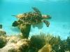 015_turtle